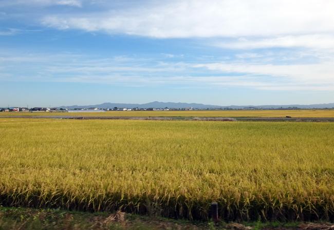 稲刈り間近の田んぼと色づき始めのリンゴなど♪_a0136293_17023687.jpg