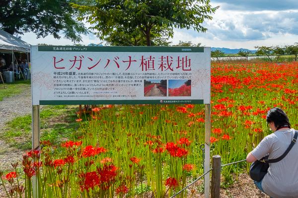 児島湖花回廊へ行く2018_d0001300_22382717.jpg