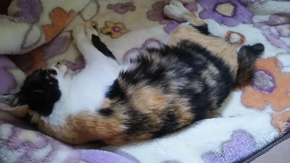 つくばで保護した老猫です_f0242002_18421593.jpg