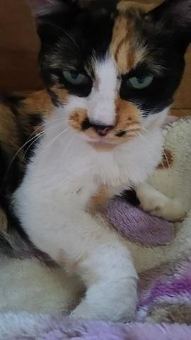 つくばで保護した老猫です_f0242002_18423666.jpg