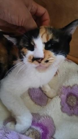 つくばで保護した老猫です_f0242002_18424135.jpg