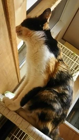 つくばで保護した老猫です_f0242002_18441262.jpg