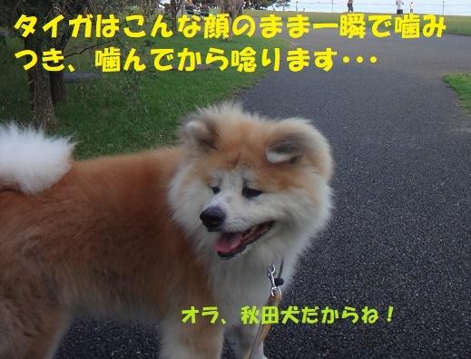f0121712_23070464.jpg