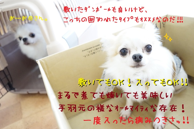 d0220513_1601799.jpg