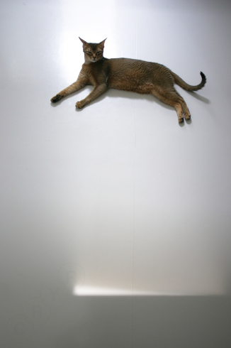 [猫的]空飛ぶ猫_e0090124_22261231.jpg