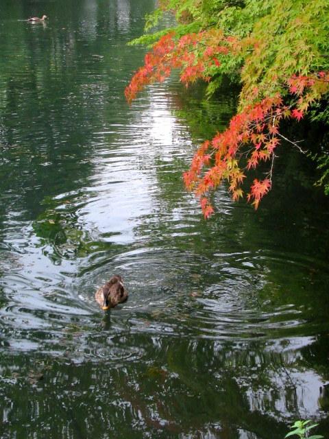 ③初秋の軽井沢をご案内 * 染まり始めた雲場池をお散歩♪_f0236260_05323648.jpg