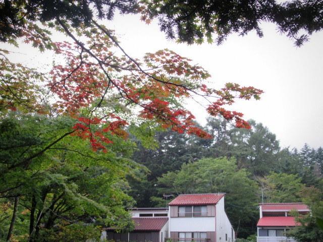 ③初秋の軽井沢をご案内 * 染まり始めた雲場池をお散歩♪_f0236260_05330368.jpg