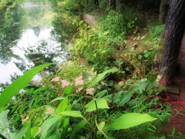 ③初秋の軽井沢をご案内 * 染まり始めた雲場池をお散歩♪_f0236260_05395004.jpg