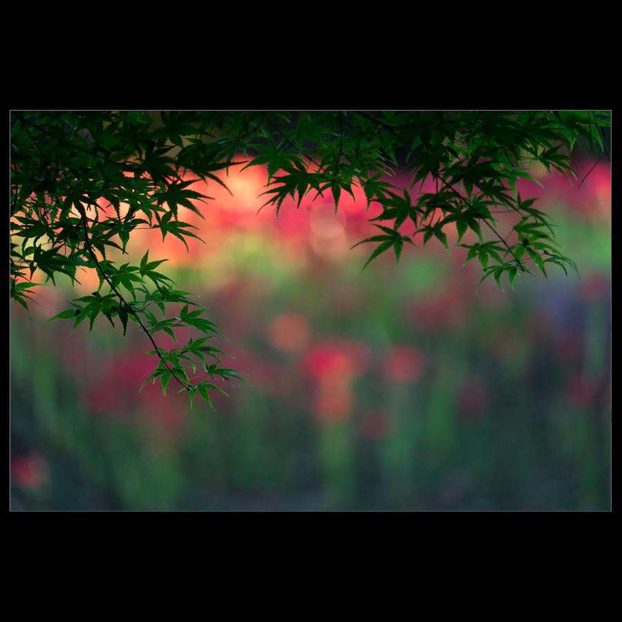 f0369264_20084143.jpg