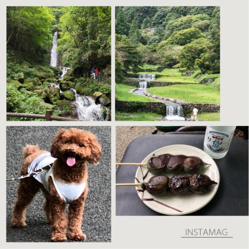 チョコ散歩・・・養老の滝へ_e0159185_15171832.jpeg