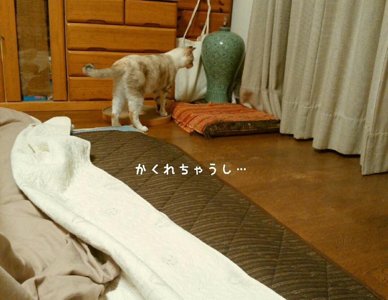 猫も癒やされたい_f0255704_20000117.jpg