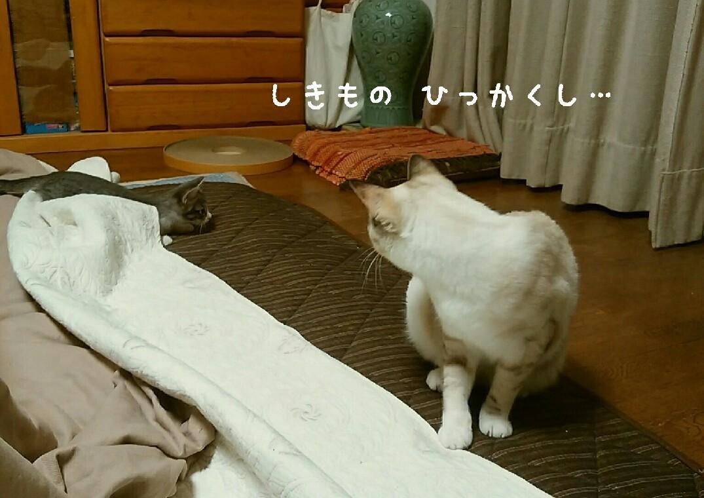 猫も癒やされたい_f0255704_20000156.jpg
