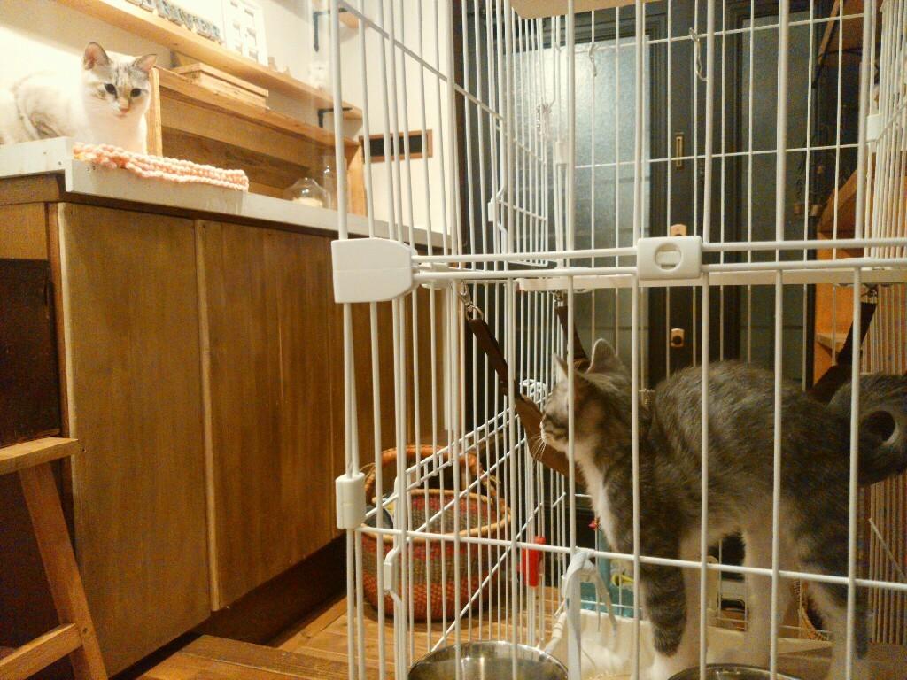 猫も癒やされたい_f0255704_22215536.jpg