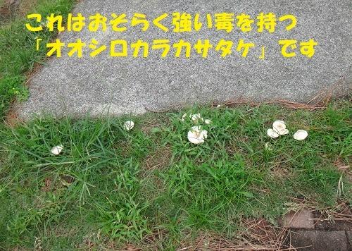 f0121712_23161848.jpg