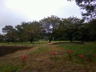 桜の葉も色づく季節に_b0255217_09342194.jpg