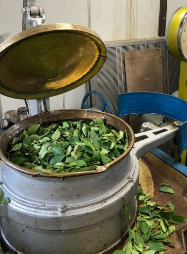 丸子紅茶作り体験_b0158721_06302329.jpg