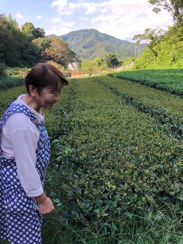 丸子紅茶作り体験_b0158721_07013583.jpg