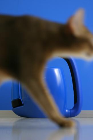 [猫的]青いオブジェ_e0090124_21241130.jpg