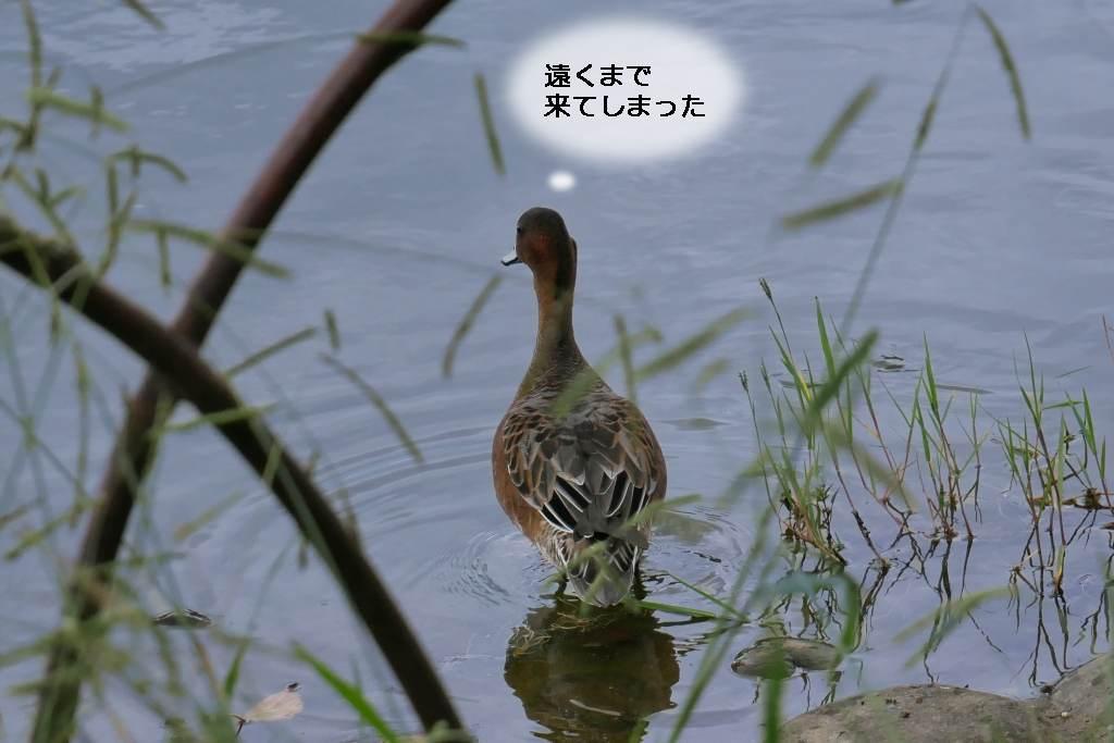 b0174191_20332015.jpg