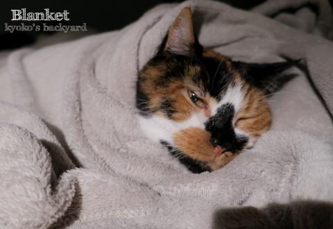フリース毛布に包まれて_b0253205_11353727.jpg