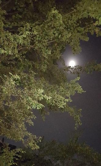 満月と~_f0126121_18155753.jpg