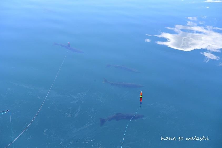 今年は釣れてます!_e0120026_16214408.jpg
