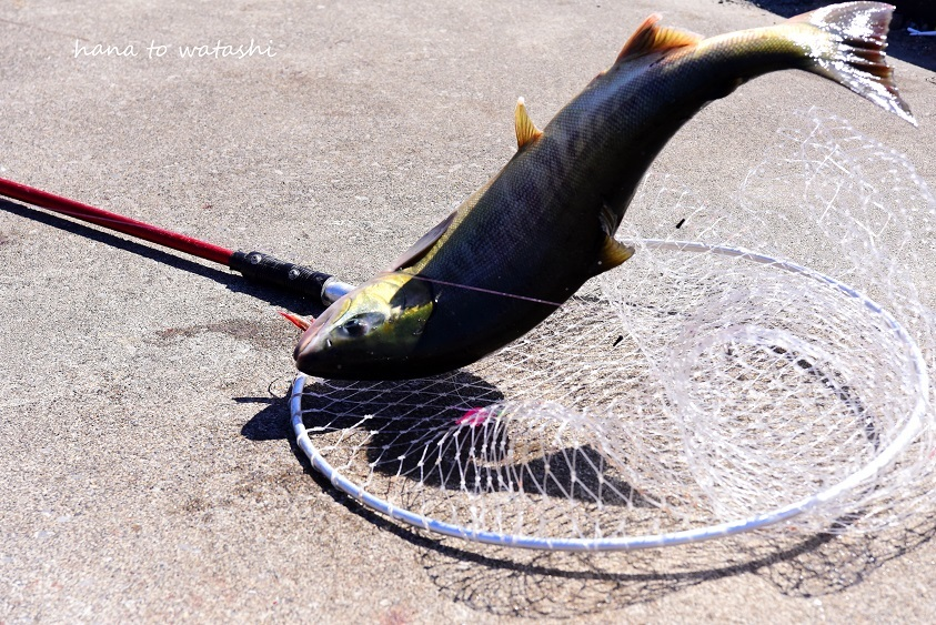 今年は釣れてます!_e0120026_16252587.jpg