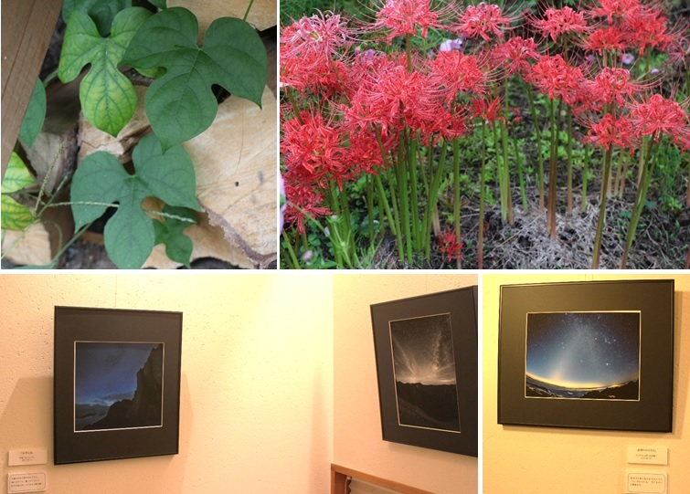 写真展と秋の花_a0212730_22355780.jpg