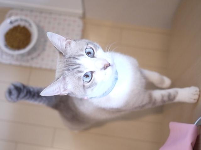 猫のお留守番 カフカくん編。_a0143140_22554124.jpg