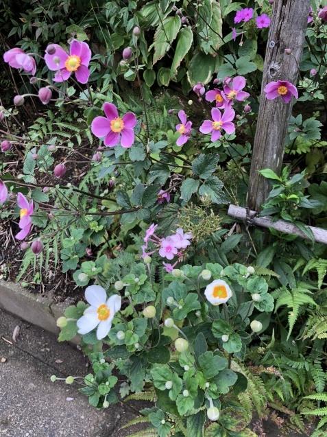 法面「秋に咲く花」_a0243064_08310649.jpg
