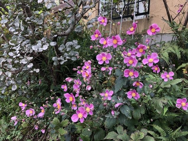 法面「秋に咲く花」_a0243064_08325876.jpg