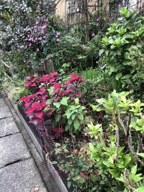 法面「秋に咲く花」_a0243064_08335011.jpg