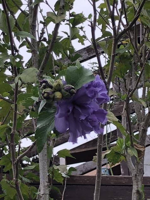 法面「秋に咲く花」_a0243064_08351922.jpg