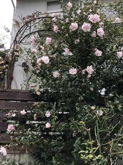 法面「秋に咲く花」_a0243064_08360396.jpg