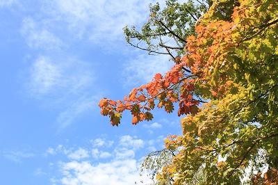 弘前公園でハートを探せ!?_d0131668_9144986.jpg