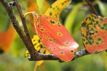 柿も秋っぽく_b0145296_14532622.jpg
