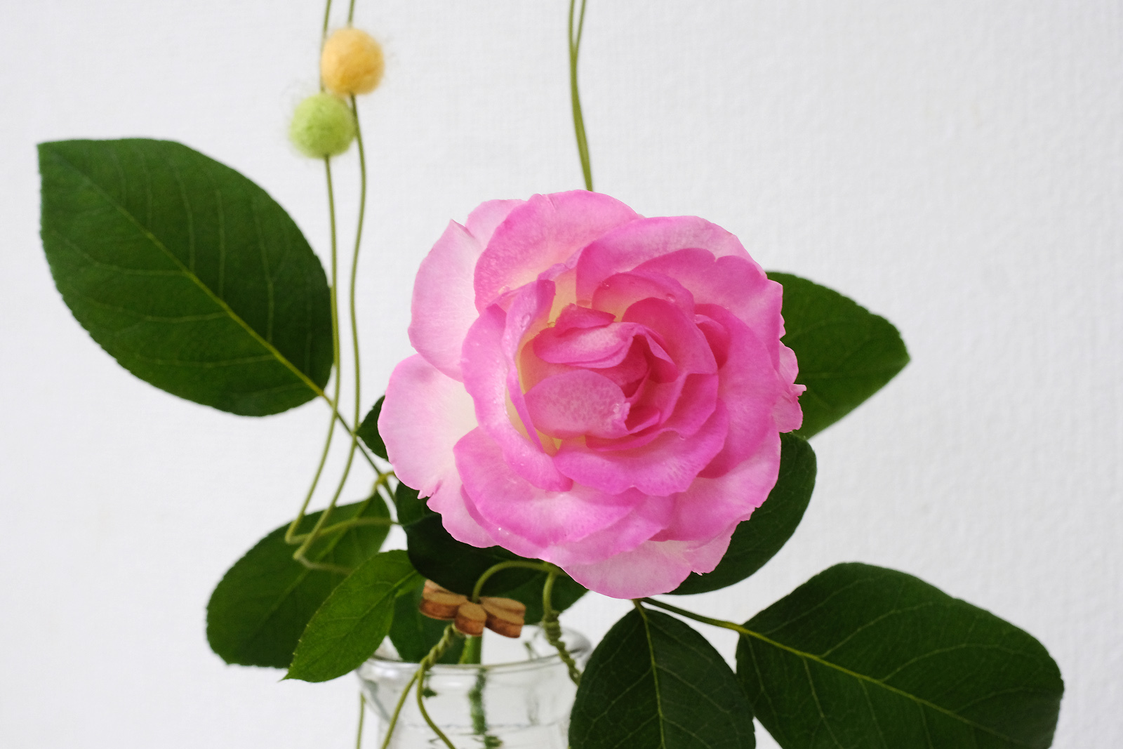 普通に撮った薔薇の花_e0367501_11440256.jpg