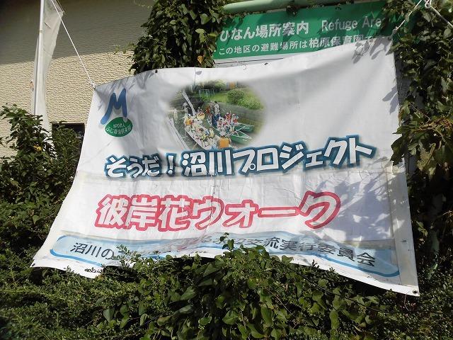 彼岸花は残念ながら最終盤 暑い中170名の皆さんに参加いただいた「彼岸花ウォーク2018」_f0141310_07080964.jpg