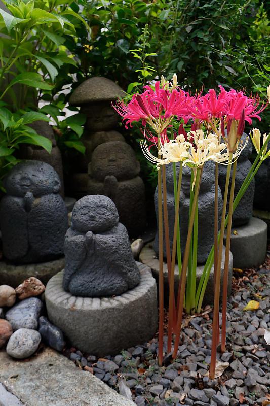 萩と秋の花達@かましきさん(勝念寺)_f0032011_22122653.jpg