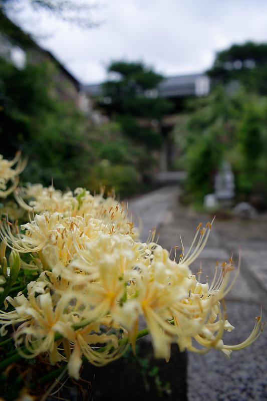 萩と秋の花達@かましきさん(勝念寺)_f0032011_22122684.jpg