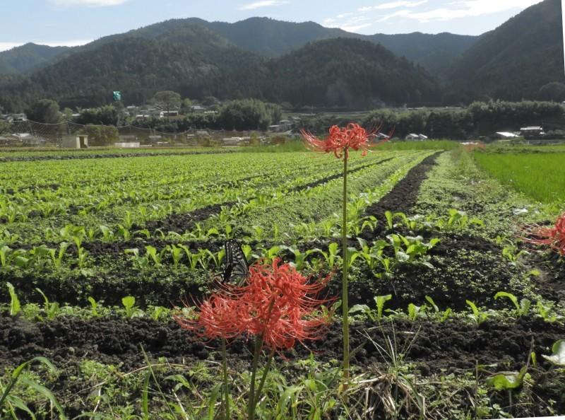 大原の里 桜井の径_e0048413_21262793.jpg