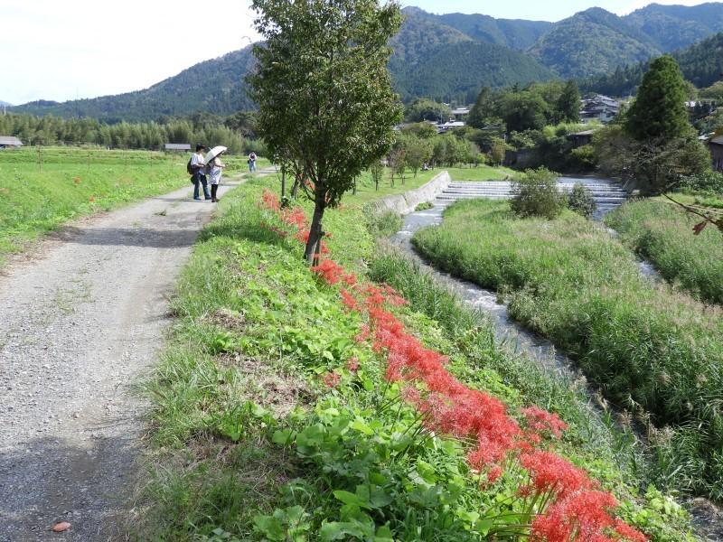 大原の里 桜井の径_e0048413_21263748.jpg