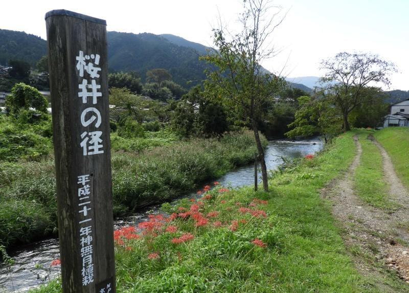 大原の里 桜井の径_e0048413_21265199.jpg