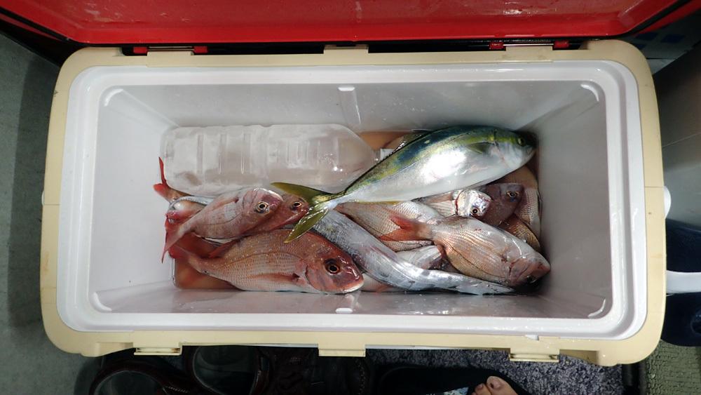 またもや大井港よりマダイ釣り。2018年9月26日(水)_d0171823_21490201.jpg