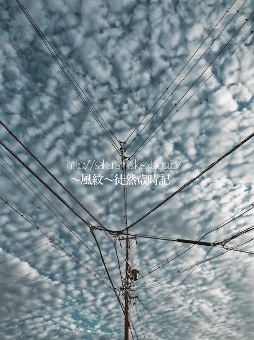 秋雨の晴れ間の鱗雲。_f0235723_2014351.jpg
