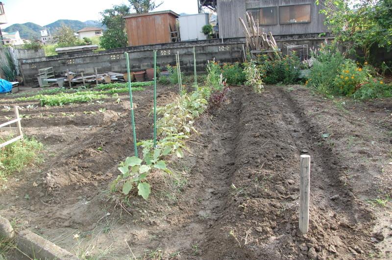 雨が止んだら 畑作業・・・我が家のボランティア_c0108460_18450393.jpg