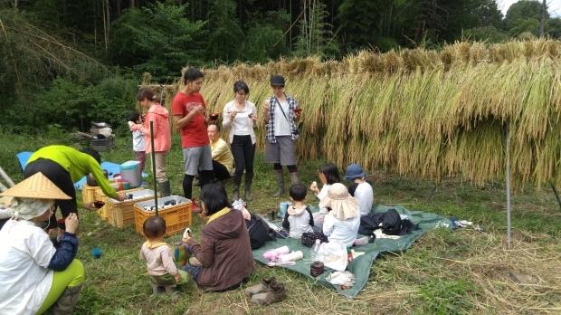 【レポート】谷津田開拓地 2018年の稲刈り_c0177665_19180922.jpg