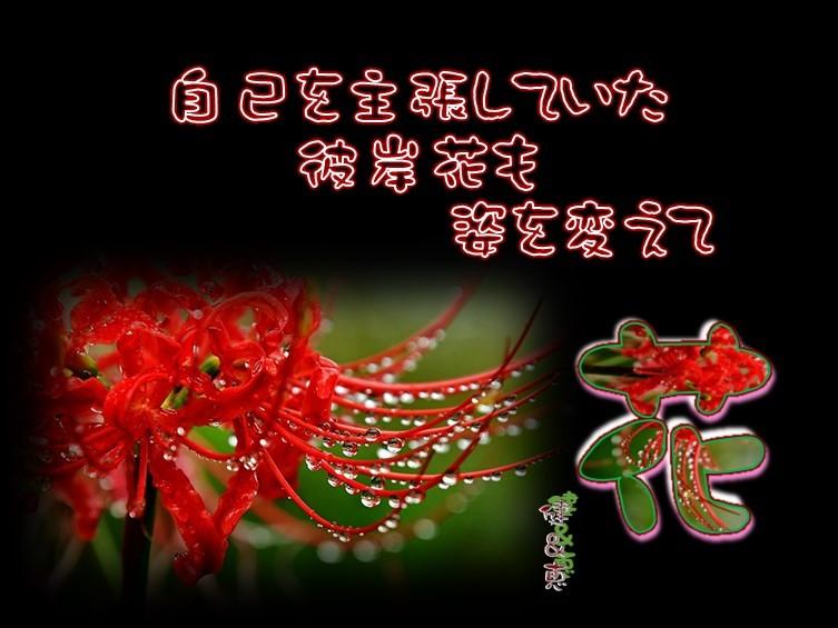 f0214467_10004959.jpg