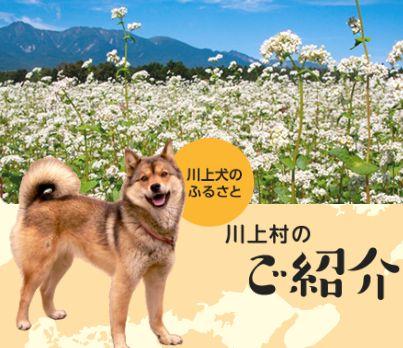 川上村_e0128391_1093349.jpg
