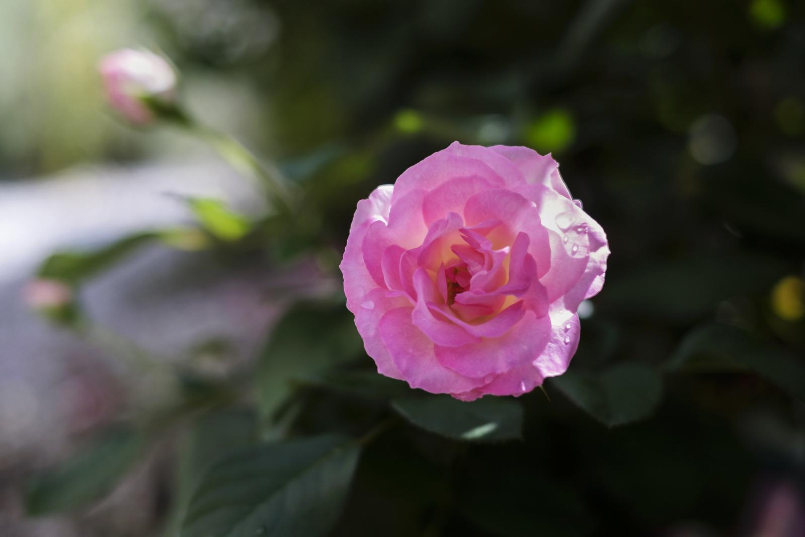 晴れた日に花の写真を撮らない理由_e0367501_11001511.jpg